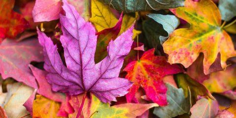 آلرژی و حساسیت فصلی