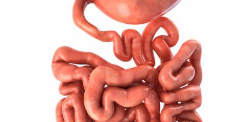 بروز اضطراب و باکتریهای داخل روده