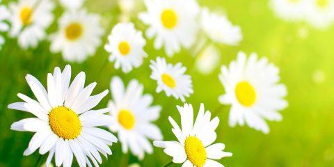 حجامت در فصل بهار
