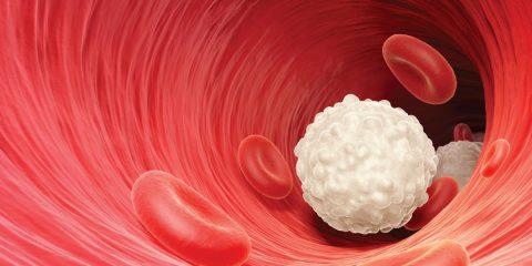 علل و بیماری هایی که باعث افزایش گلبولهای سفید خون می شوند